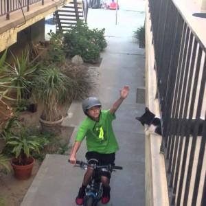 行ってこい!通行人にハイタッチする猫が可愛すぎる