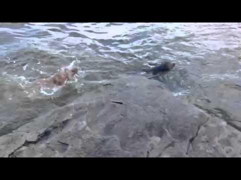 胸を打たれる!飼い主が海に落ちたと勘違いした犬の行動に涙