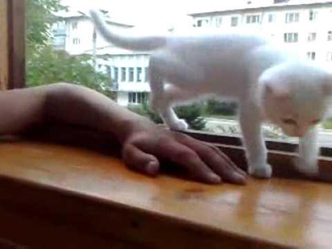 【胸キュン必至】危ないから窓の外に手を出しちゃダメにゃ~(猫)