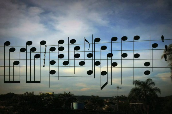 5本の電線に止まったカラスたちを音符に!自然が生み出したメロディー