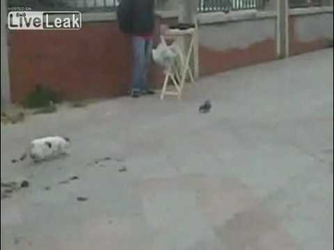芸人もビックリ!狙っていた獲物を逃したネコのリアクションが…!