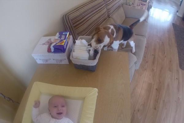 とってもラブリー!赤ちゃんのお世話を手伝ってくれるワンコが可愛い