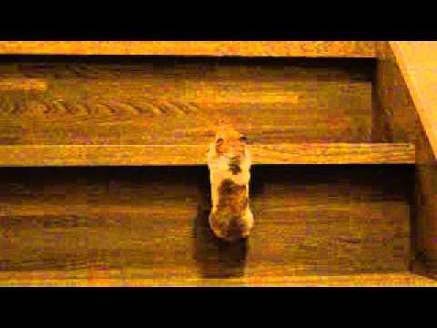 思わず応援したくなる!一生懸命に階段を登るハムスターが可愛すぎ