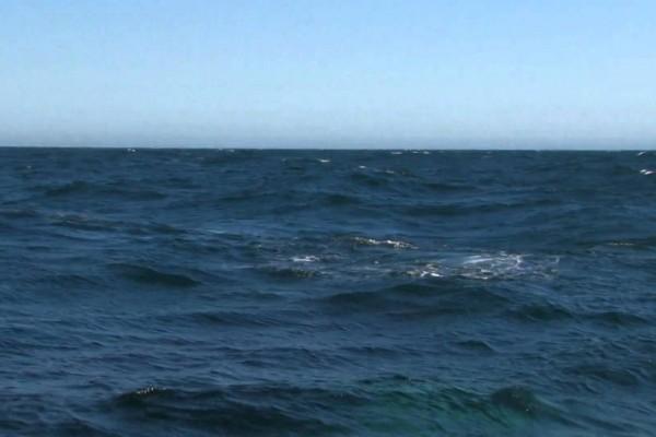 【映像】まばたき厳禁!クジラの潮吹きで作られた虹が神秘的な美しさ!