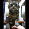 【癒し】ご主人に向かって「撫でるの止めてもらえませんか?」な猫。