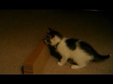 【笑いと癒し】偶然起こった激カワ映像!猫と遊んでいたら最後に…