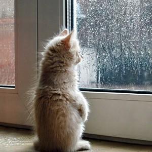 愛くるしい姿に胸キュン!飼い主の帰りを待つ「窓際ネコ」が可愛すぎる