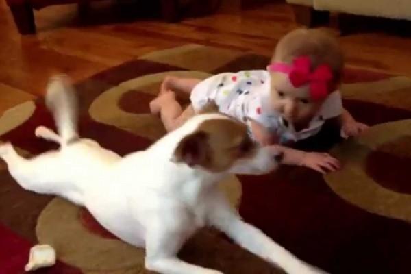 赤ちゃんにハイハイを教えるワンコ。それを見た瞬間の表情がナイスすぎる!