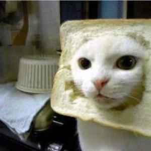 【食べてたパンが消えた】爆笑と共にキュン死!猫写真でボケる17連発