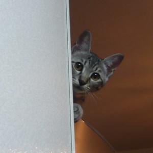 【いつも見てます】飼い主にバレないように隠れて覗くネコたち(11枚)