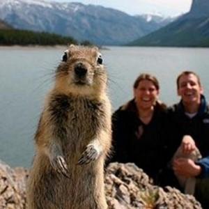 【主役は私です】記念撮影で偶然映り込んでしまった動物たち