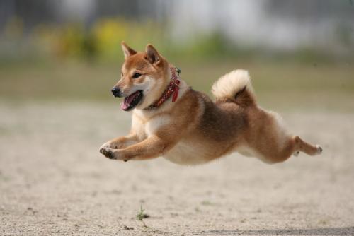 犬の画像 p1_35