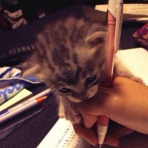 【勉強ヤメテ】飼い主さんの机を邪魔するネコちゃんたちの写真(7枚)