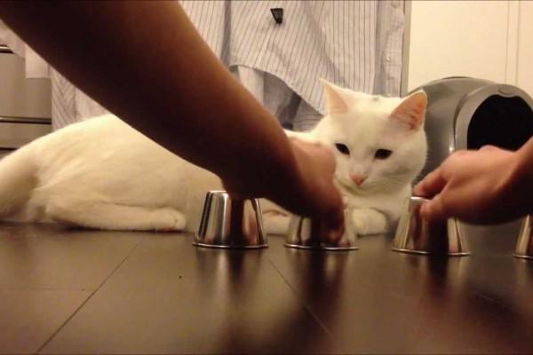 【私、失敗しないので】賢い!そして可愛い!飼い主とのゲームに絶対勝つネコ
