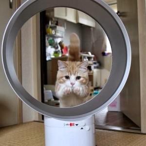 【家電×ネコ】拝啓、飼い主様。こんなに素敵な家電をありがとにゃ(9枚)