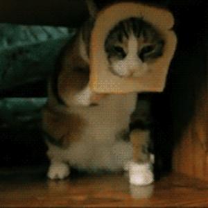 【ホントにたまらにゃい】可愛い仕草をするネコのGIF画像(9連発)