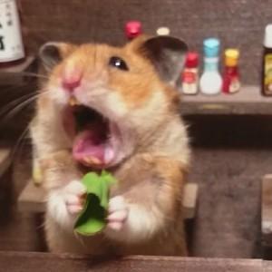 【これはかわいい!!!】店主がハムスターの小さな居酒屋が話題に(画像)