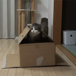 【幸せそうで何よりです】箱を愛する猫さんたちの、可愛すぎるGIF(9枚)