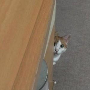 【じーーっ】不意打ちの視線。見てる、すごく見ている。(猫8枚)