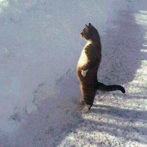 【あぁ、間違いない】猫さんが立ってる!どう見ても、二本足で(12枚)