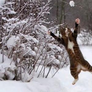 【間違いない】雪はネコをより輝かせる。ゼッタイ。カワイイ。(5枚+2)