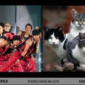 【息を合わせてチューチュートレイン】猫界のエグザイルの皆さまです(9枚)