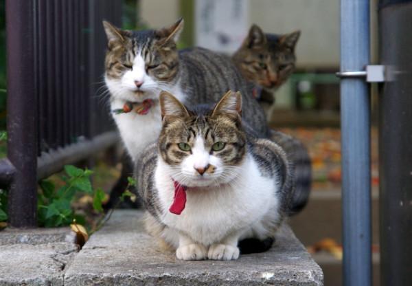 おいしそうな脚の女子校生 229脚目猫ガイジ隔離スレ [無断転載禁止]©bbspink.com->画像>4564枚
