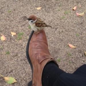 【あぁ、間違いない】鳥さんたち、カワイイです。可愛すぎです!(11枚)