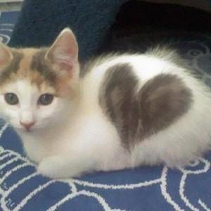 【お、ハート柄に、見える、ぞ!?】奇跡の模様を持った猫さんたち(8選)