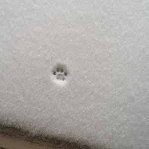 【寒いから外でるの止めた】猫、雪、残る肉球の跡。たまりませぬ(5+1)