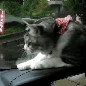 【動きがたまらん】ネコリンピックでメダルをあげたい9匹の猫さん(GIF)