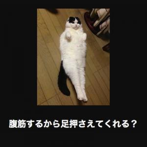 【あぁ、間違いない、言ってる】猫の写真で大喜利せよ10連発
