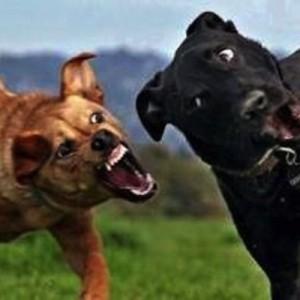 【はぁ~?聞こえませ~ん】犬の画像だけでボケてみた17連発