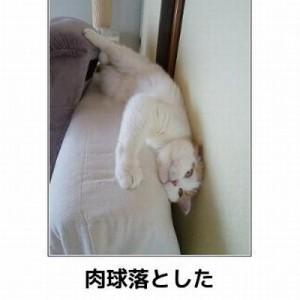 【爆笑と共にキュン死!】勢いのあるネコの写真でそれらしくボケて11枚