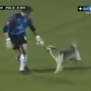 試合中のハプニング!乱入してきた犬に対応するキーパーの行動が素敵すぎた