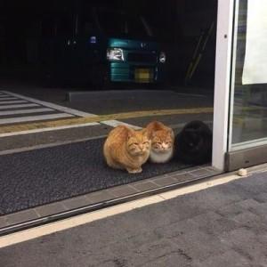 【何してるの?】コンビニの入り口の前で待機するネコ(画像9枚)