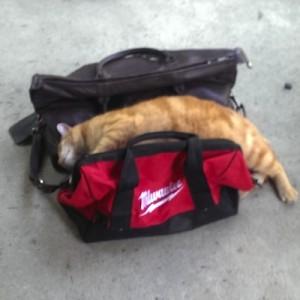 【一緒に連れてって】飼い主が旅行に行くと察知した瞬間のネコ(8枚+1)
