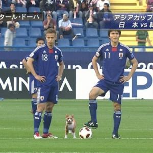 【可愛すぎて笑った】試合中のサッカーの写真に猫を投入してみた10枚+1