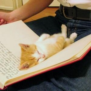 【かまってください】飼い主の邪魔をすることに決めた瞬間のネコ(12選)