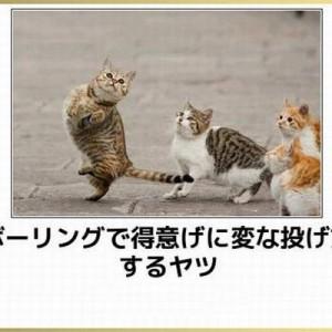 【可愛い!笑える!】どんな疲れも吹っ飛ぶ『猫』の傑作ボケて(10選)