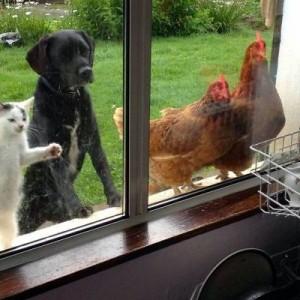 【ごめんくださ~い】家の中に入りたくて奮闘する動物たち(10枚)
