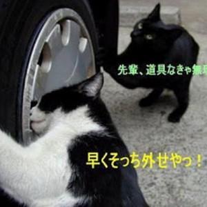 【お支払は猫缶で】実は職業が「自動車整備士」なネコたち(画像11枚)