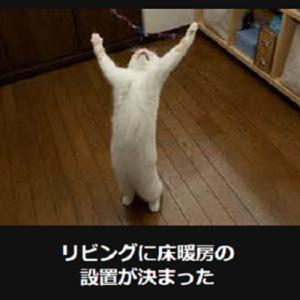 猫の画像で一言ボケて!おもしろかわいいネコ「大喜利」13連発