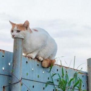 自由すぎる(笑)「そんなところで何してるの?」な猫さんたち13選