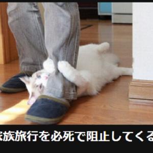 【そういう状況にしか見えない】オモシロ可愛い「にゃんこ」大喜利9選