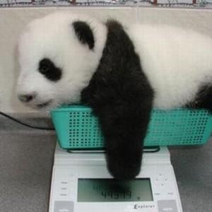 みんな良い子にしてる(笑)動物の体重測定の写真が可愛すぎる【8枚】