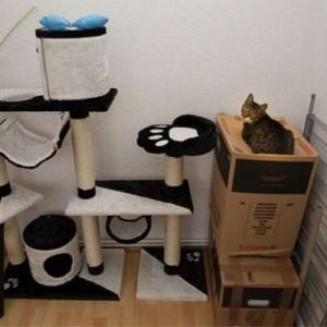 【キャットタワーより段ボール】あるある!猫を飼っているとありがちな15の光景