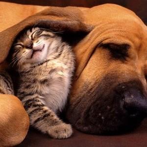 「親友だし…!」犬と猫は最高の友達になれるという13の証拠(画像)