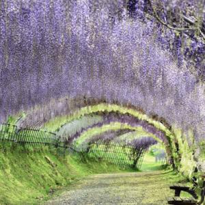 【日本にも絶景はいっぱいある!】世界が認めた「日本の美しい場所」14選