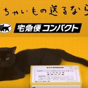 【悶絶】クロネコヤマトの梱包箱の組み立て方を黒猫が教えてくれる動画